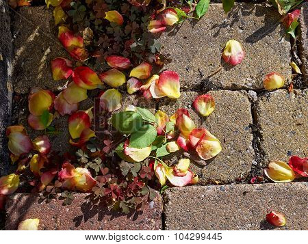 Rose Petal Leaves On The Ground