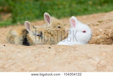 Three cute little bunnies