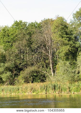 Forest lake or pond with trees. Green and dark water with grass leafs and flowers