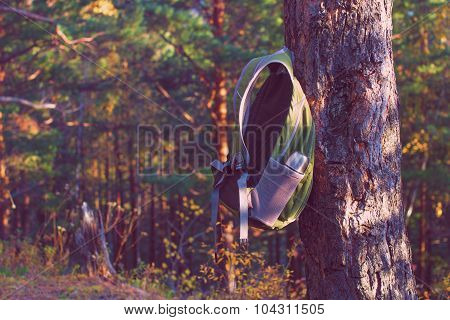 backpack hanging on pine tree in conifers forest