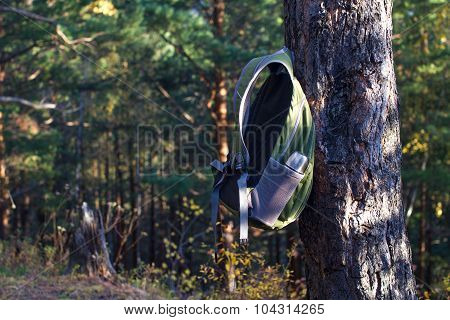 Backpack Hanging On Pine Tree