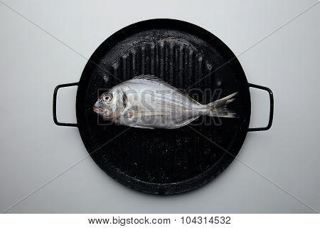 Wild Dorada Isolated On Black Grill Pan