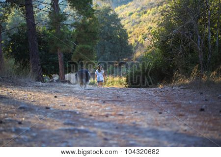 Young Girl With Collie Dog Walking In The Forest.