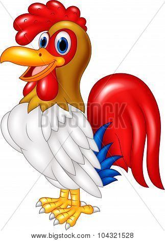 Cartoon chicken rooster posing. isolated on white background