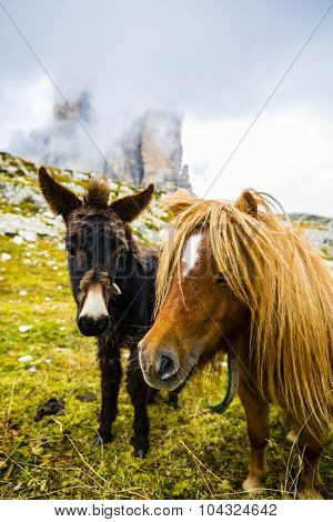 Pony and donkey graze in the Dolomites, Tre Cime di Lavaredo, Italy