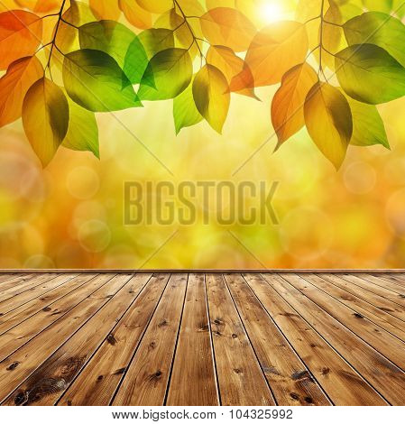 Autumn leaves above the empty wooden board