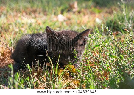 Little black kitty hiding in wild grass