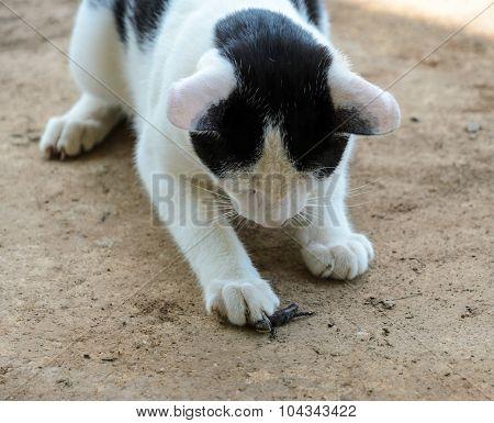 Cat Catching A Lizard