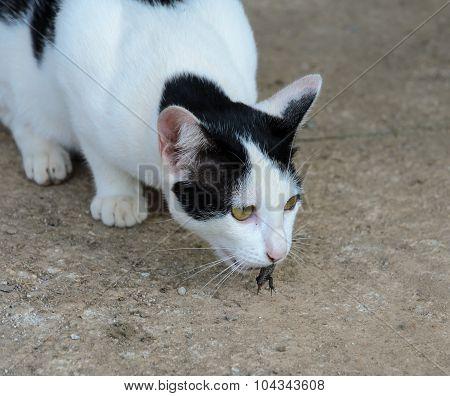 Cat Catching Lizard On Ground