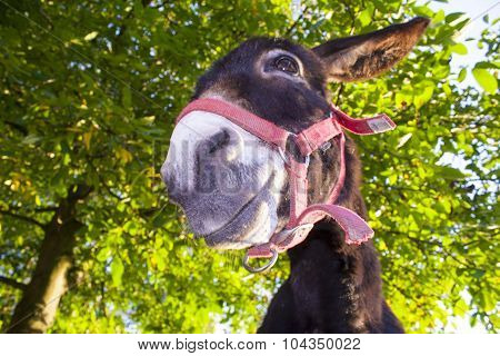Funny Donkey With Backlighting In The Meadow