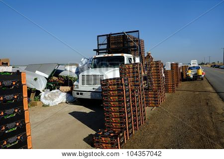 Loading Boxes of Grapes