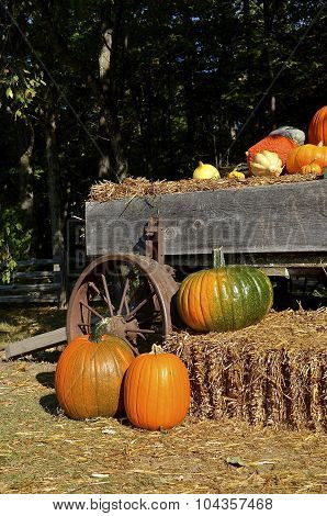 Trailer full of pumpkins and gourds
