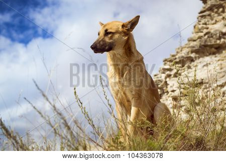 German shepherd guarding the ruins