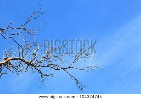 Brunch Of Tree Against Blue Sky