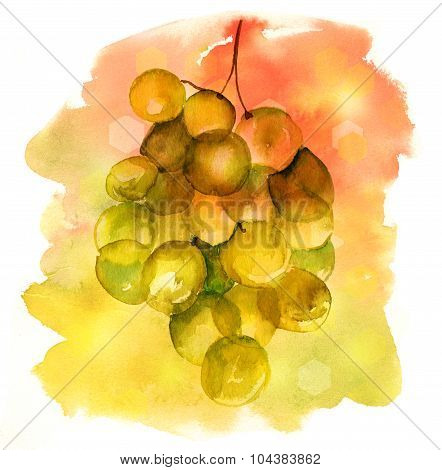 A watercolour banner with a bright branch of white grapes on a colorful artistic background