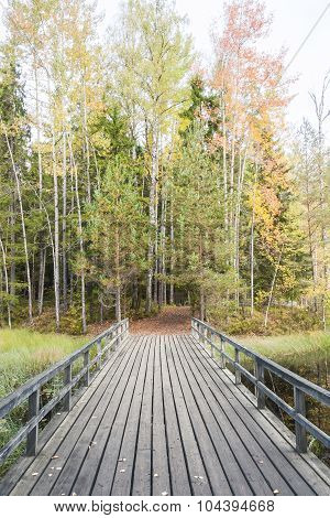 Bridge In Colorful Autumn Forest