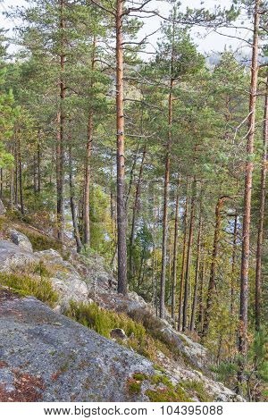 Forest On A Cliff