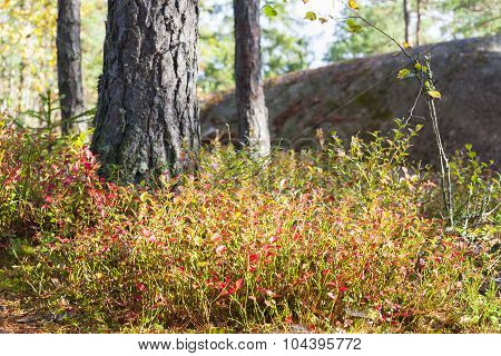Colorful Plants In Autumn