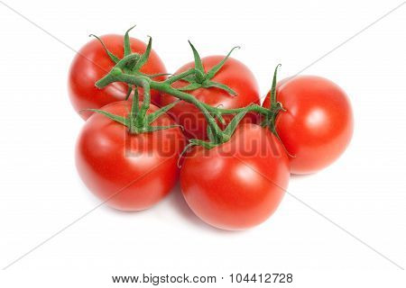 Fresh Red Ripe Tomatoes On The Vine. Isolated On White Background