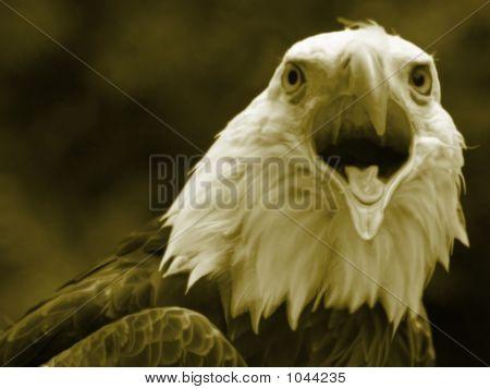 Liquid Eagle