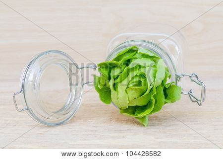 Butter Head In Glass Jar.