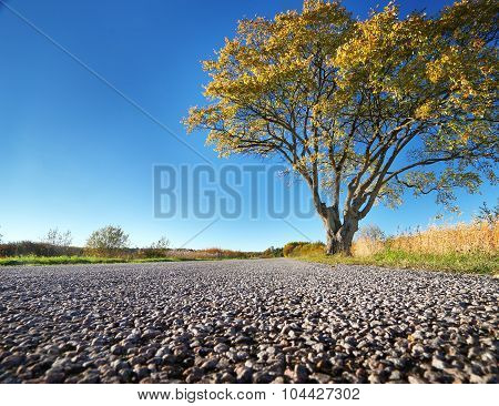 Elm tree on the road side