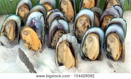 Cold New Zealand Mussels