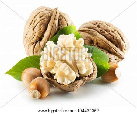 Walnuts With Leaves And Hazel Nuts Isolated On The White Background