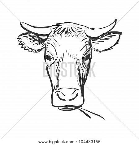doodle cow