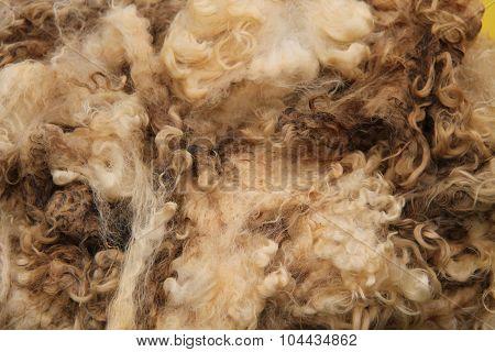 Wool Fleece.