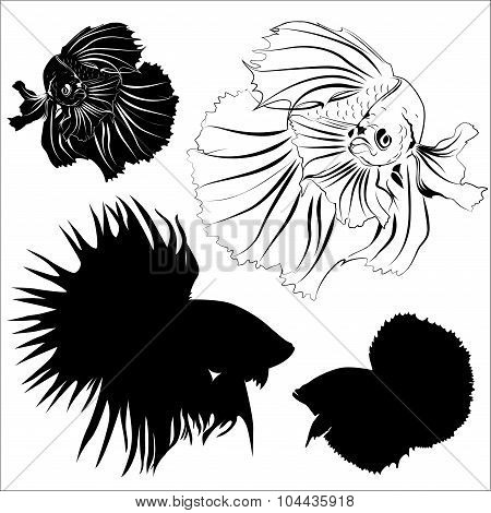 Siamease Fighting Fish Vector