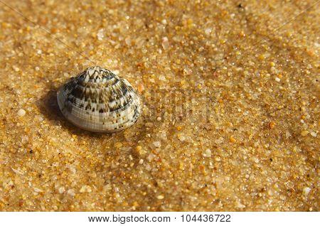 Small Coloured Clam Over Sand Beach
