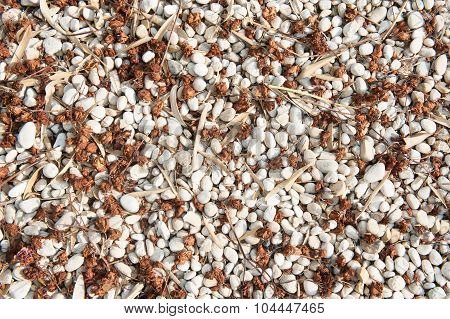 Loose Gravel Texture With Natural Seeds And Leaves