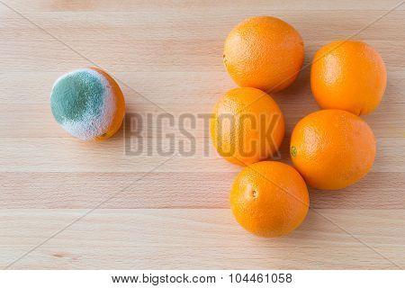 Moldy Rotten Orange Fruit Near Group Of Fresh Oranges.