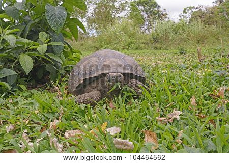 Face To Face With A Galapagos Tortoise