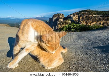 Stray cat in Meteora landscape