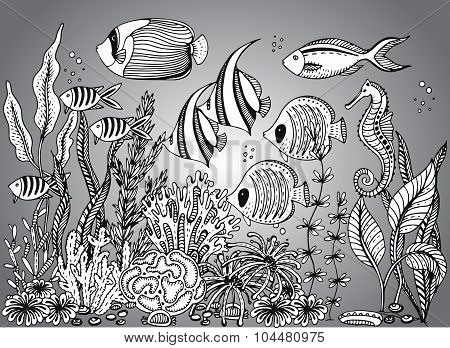 Vector Monochrome Hand Drawn Illustration With Seashell