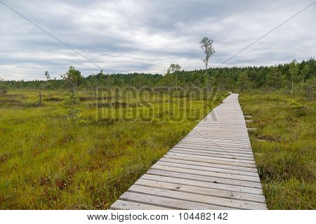 Landscape Of Tolkuse Bog With Plank Pathway