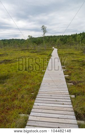Plank Hiking Trail Through Tolkuse Bog
