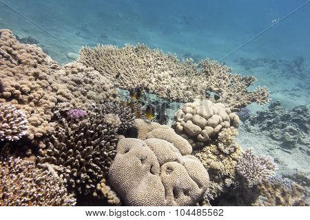 Colorful Coral Reef With Hard Corals At The Bottom Of Tropical Sea On A Background Of Blue Water