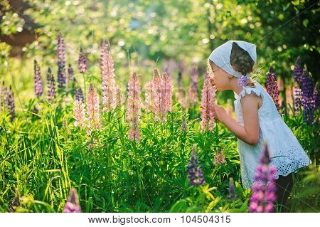 cute child girl smells flowers on summer lupin field