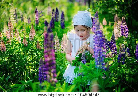 cute child girl picking flowers on summer lupin field