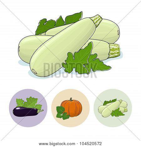 Icons Zucchini, Pumpkin, Eggplant
