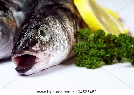 Sea bass fish close up garnished with herb and citrus