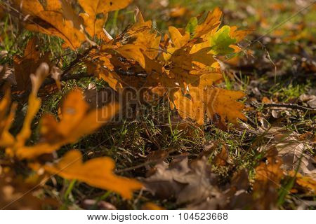 Close Up view on the ground covered with falling leaves