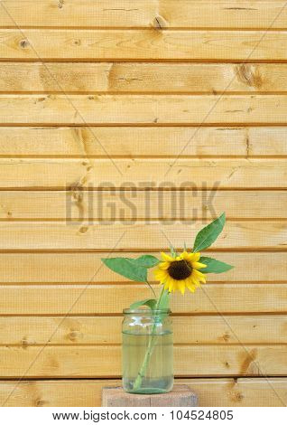 Sunflower and wooden wall
