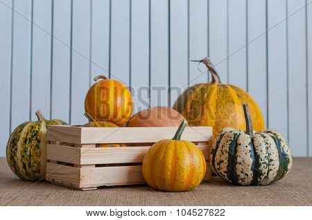 assortment squashes and pumpkins in wooden crate on white rustic background