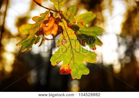 Abstract autumn oak tree twig