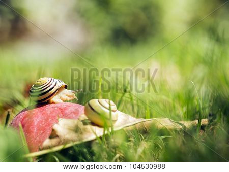 Snails On An Apple