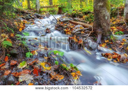 beauty brook and leaves in forest